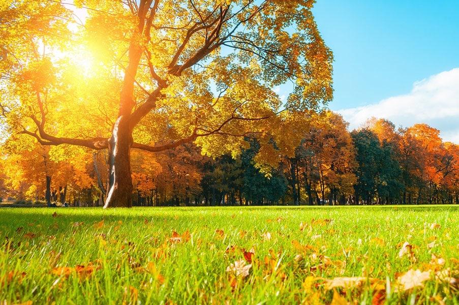 fall-yard