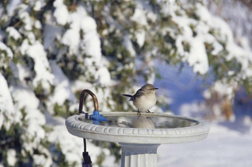 Heated Bird Bath