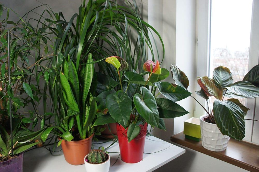 House plants from Strader's Garden Center