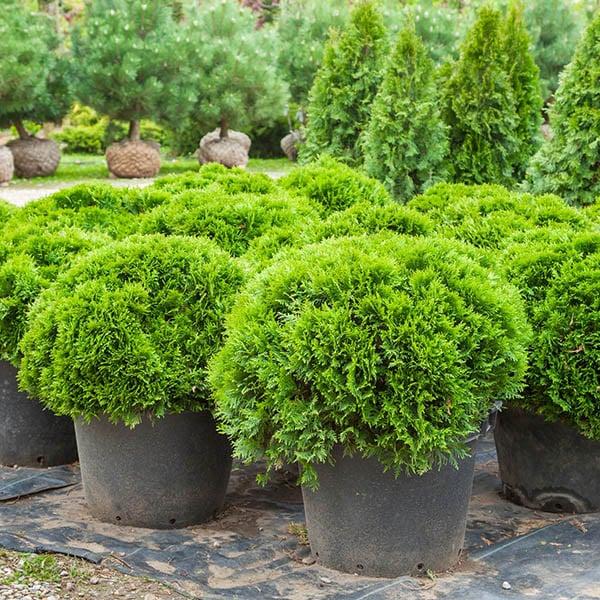 Plants from Strader's Nursery